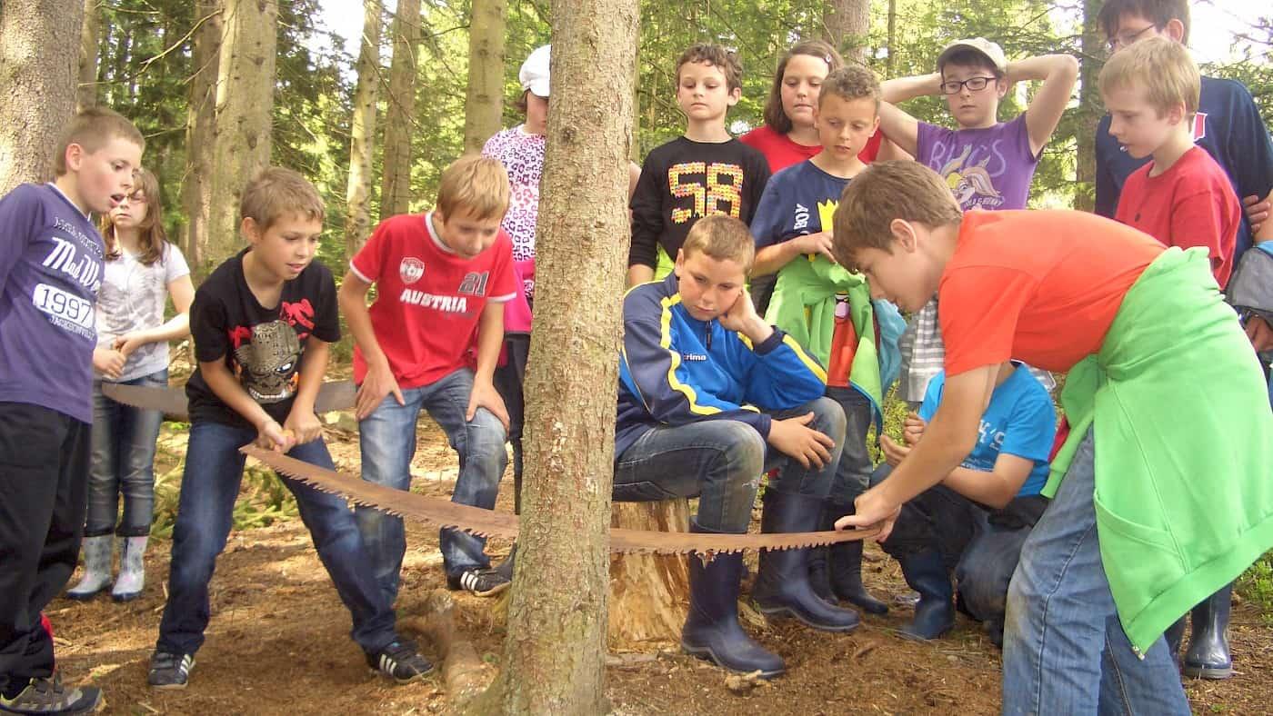 Vom Baum zum Grillholz