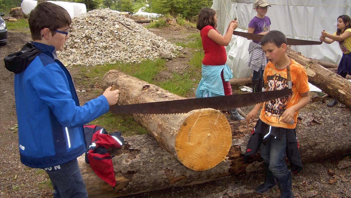 Baumscheiben sägen