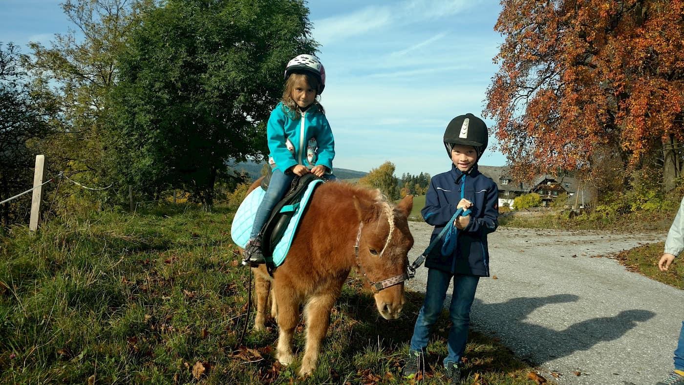 Ponyreiten zum Zauberbaum