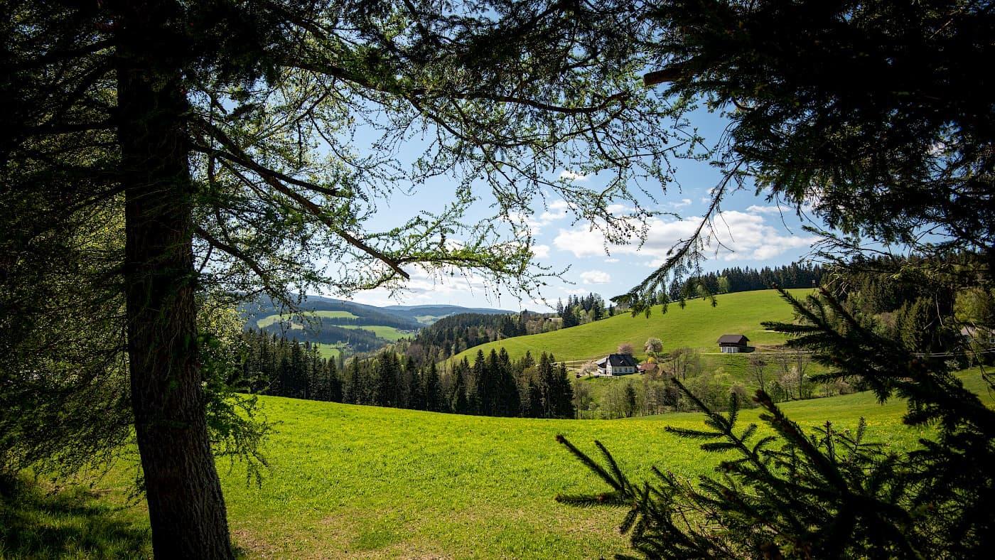 wunderschöne Waldheimat-Joglland Region