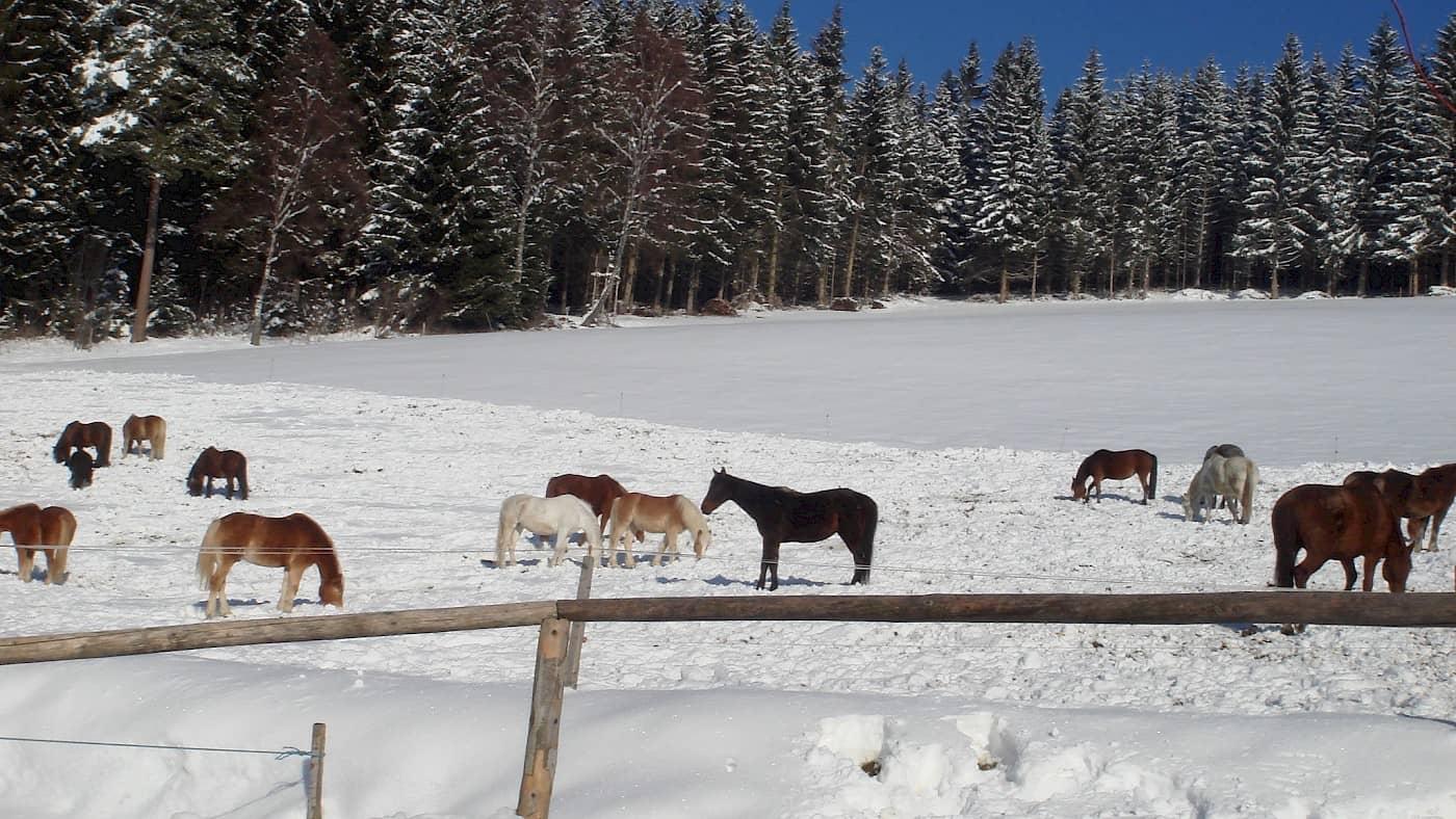 Reiterparadies Ponyhof
