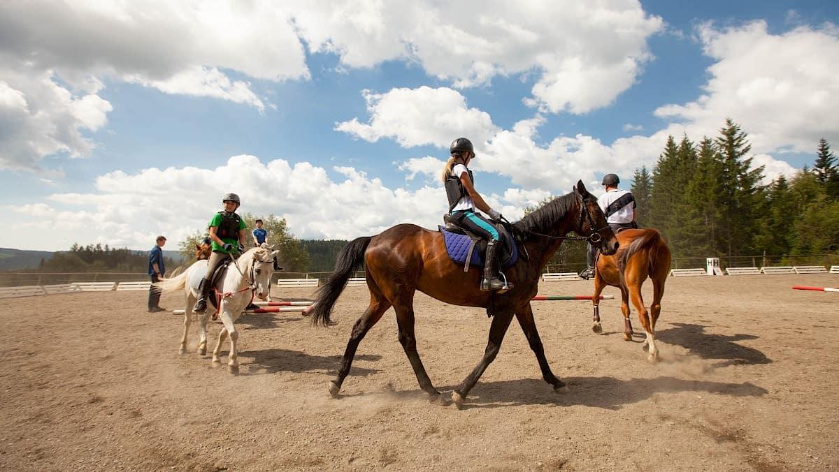 volle Konzentration am Pferd Aussenreitplatz