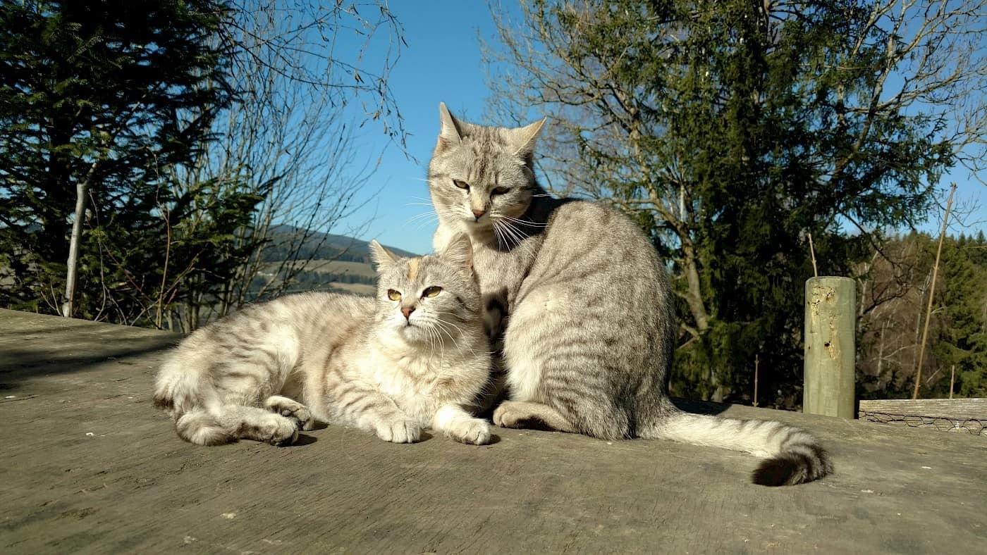 Katzen am Ponyhof
