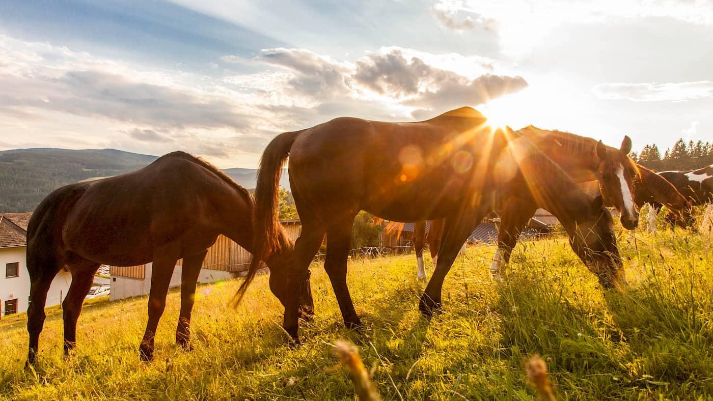Pferdeglück am Ponyhof