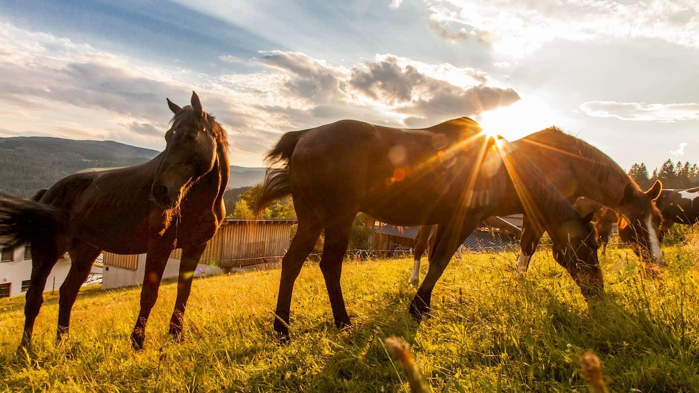 Pferde auf der Ponyhofkoppel