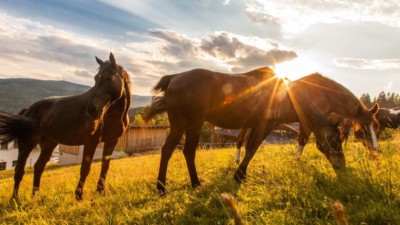Pferdekoppel Ponyhof