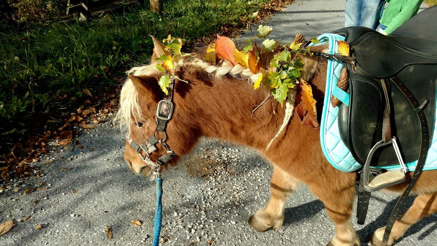 Ponyreiten im Herbst